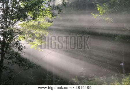 Light Shaft Of Rising Sun Through The Trees In Early Morning Forest