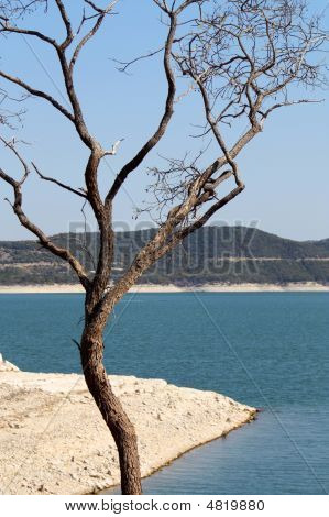 Lake Travis Tree