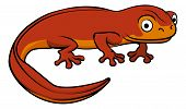 image of newt  - An illustration of a happy cute cartoon newt - JPG