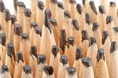 pic of blunt  - Sharp pencil among the blunt - JPG