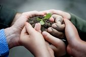 picture of environmental conservation  - Farmers hands holding a fresh young plant - JPG
