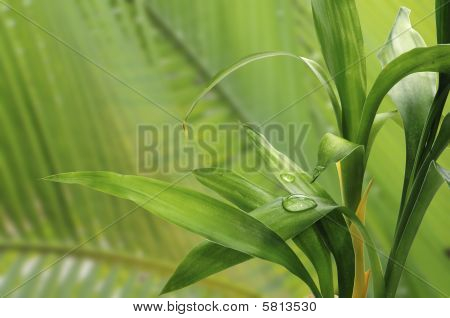 Green Bamboo Close-up