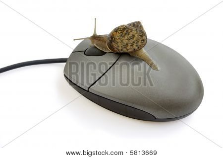 Garden Snail Pressing Mouse Button.