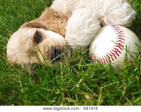 ACS Baseball