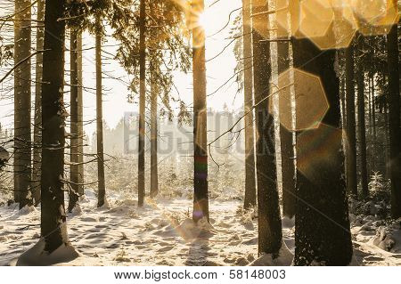 Winter Forest with Lense Spots