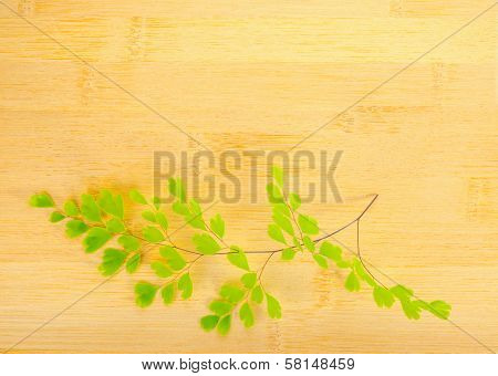 Green Branch On Wooden Bamboo  Background