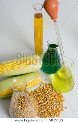 Bio Fuel Research