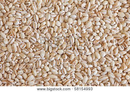 Pearl Barley (pearled Barley)