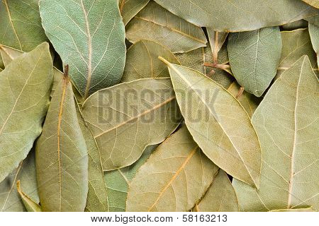 Bay Leaves Background.