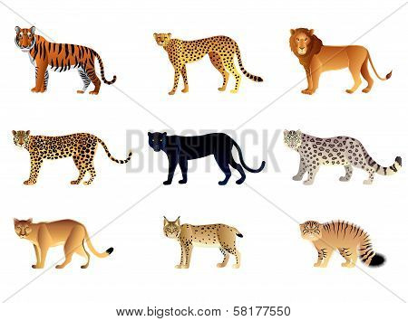 Big Cats Vector Set