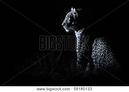 Leopard Sitting In Darkness Hunting Prey Artistic Conversion