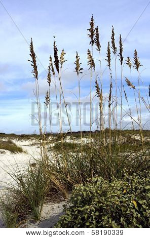 Sea Oats and Sand