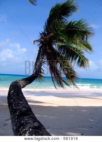 Tropical Beach In The South Pacific Ocean