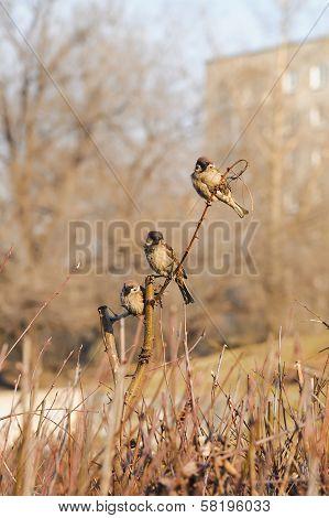 Shelter Of Small Defenceless Sparrow Birds Family. Wildlife Scene