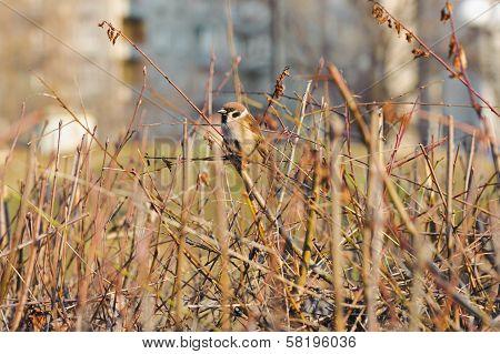 Shelter Of Small Defenceless Sparrow Bird. Wildlife Scene