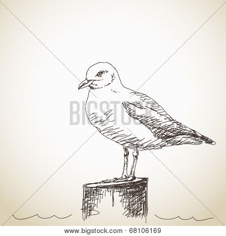 Vector Illustration Sketch of Seagull isolated standing
