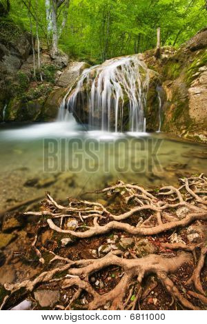 Waterfall And Roots