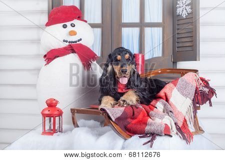 English cocker spaniel with winter decoration