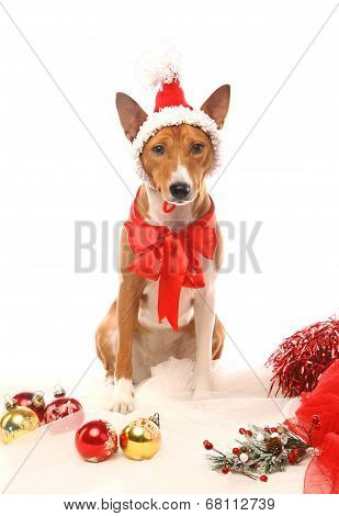 Basenji with christmass tree decorations.