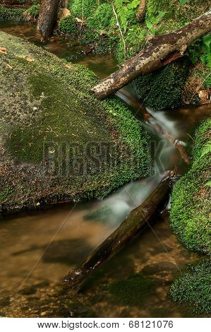 Forest rivulet