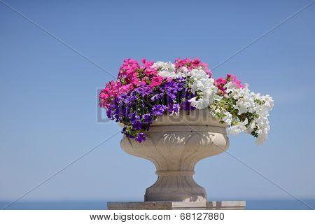 pot with petunias