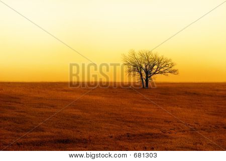 Lone Tree In The Autum Sunrise