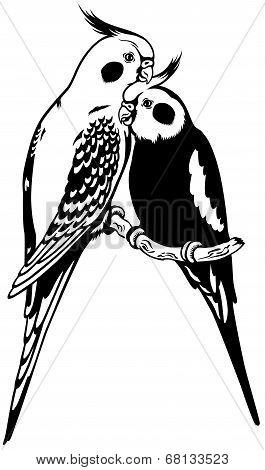 cockatiels black white