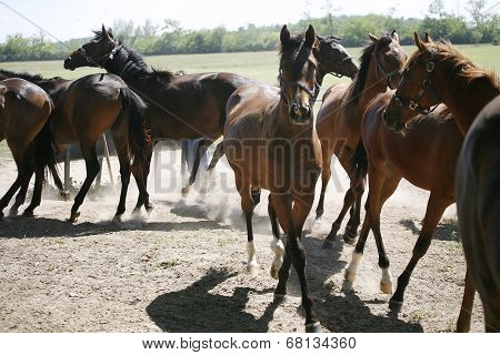 Young purebred horses in the farm at summertime