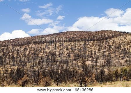 Burned Hillside