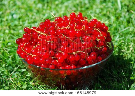 Redcurrants In Glass Bowl