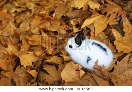 Cute fluffy bunny in autumn leaves