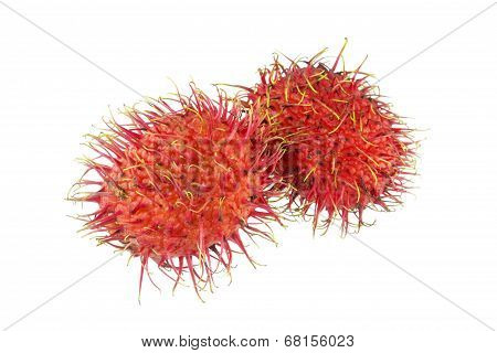 Rambutan - Tropical Fruits Rambutan