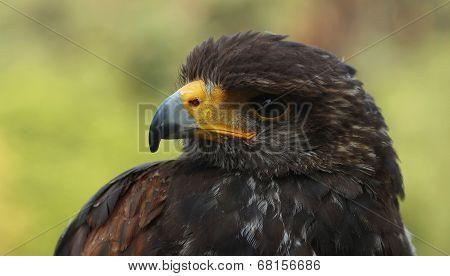 Birds of prey..