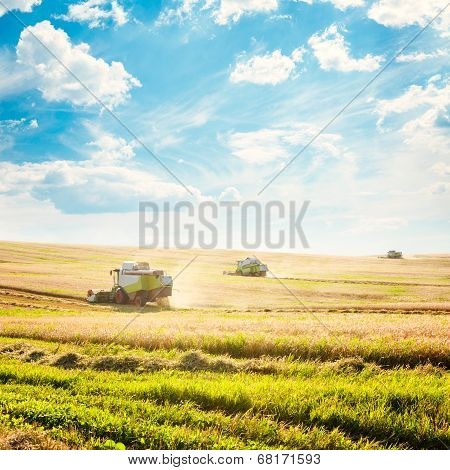 Combine Harvesters on a Wheat Field