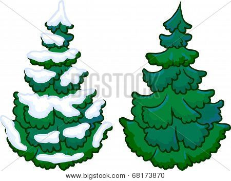 Illustration of conifer trees. Isolated