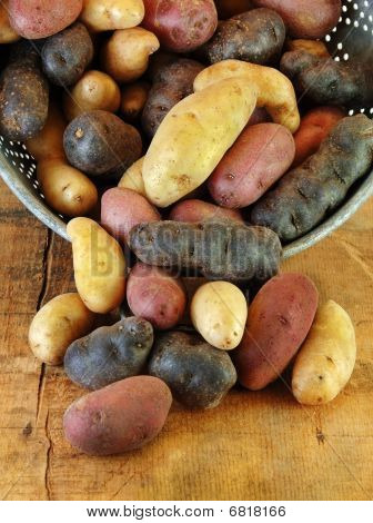Variety Of Fingerling Potatoes In Collander