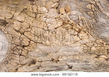 Weathered tree bark with cracks on closeup