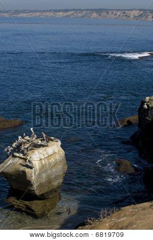 Pelicans Along The California Coast