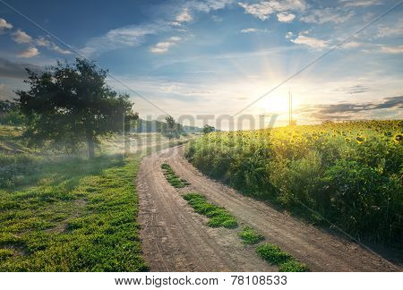 Country road and sunflowers