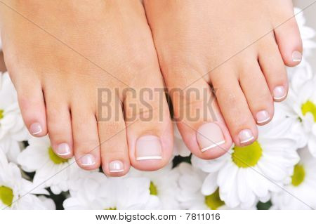 Beautiful Well-groomed Female Feet