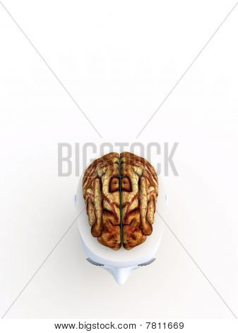 Open Top Anatomical Head