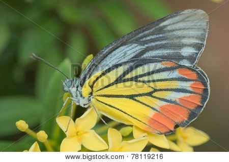 Closeup of butterfly