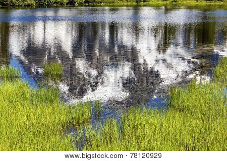 Picture Lake Reflection Abstract Green Grass Mount Shuksan Washington Usa