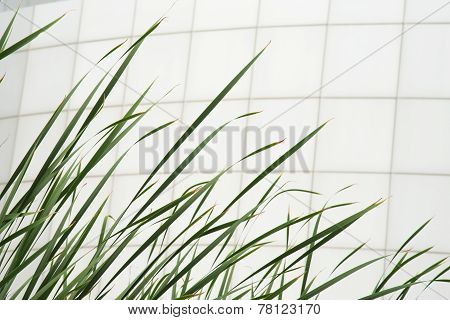 Green And White Tiles Building Wall