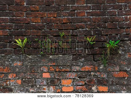 Grass Struggling For Life On The Wall Of Brick