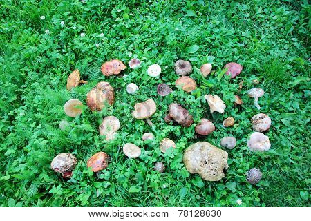 Wild Mushrooms Arranged On Green Grass