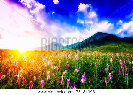 Sunset In A Flowery Meadow