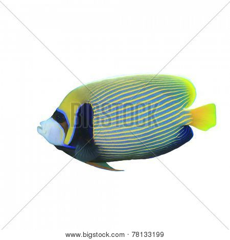 Emperor Angelfish isolated on white background