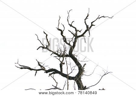 Dead Tree Branches Isolated.