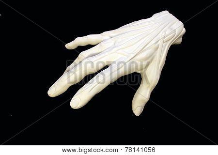 Gypsum Hand